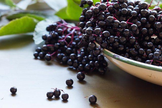 black-elderberry