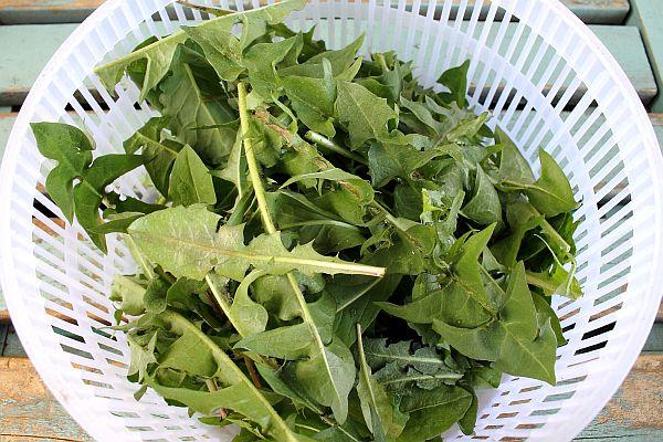 salata-ot-gluharche